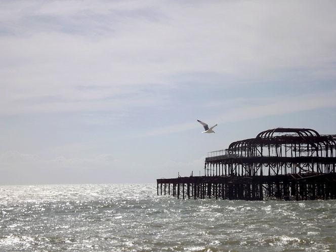 Seagull_vs_pier