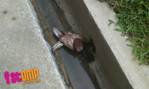 Kind-hearted Hougang Sec students help bird trapped in drain
