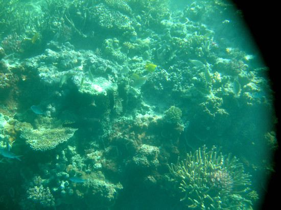 Great Barrier Reef Trip Day 2: Snorkeling at the Coral Lagoon