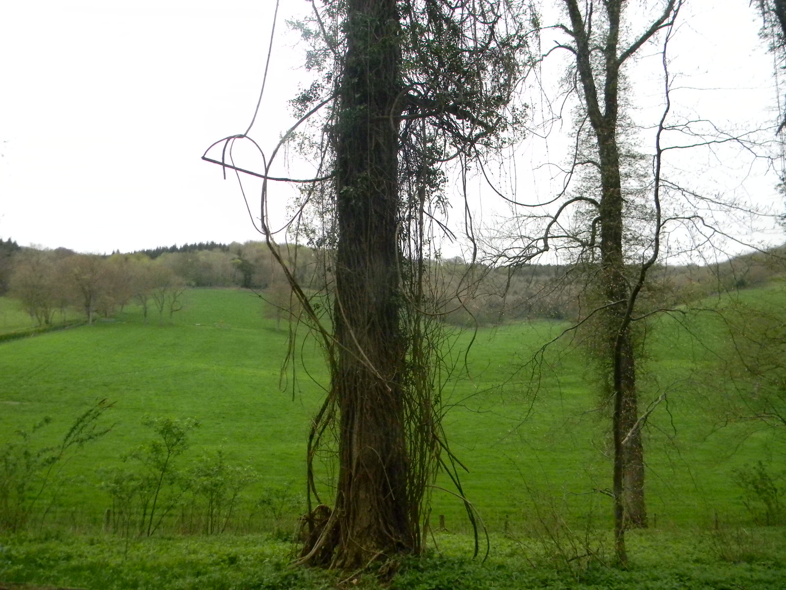 View near Colekitchen Farm Guildford to Westhumble