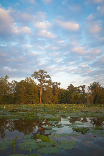 flowers trees sunset cloud lake tree water clouds sunrise scott landscape photography dawn photo louisiana lily martin cloudy photos dusk bayou swamp cypress pads waterscape mohrman