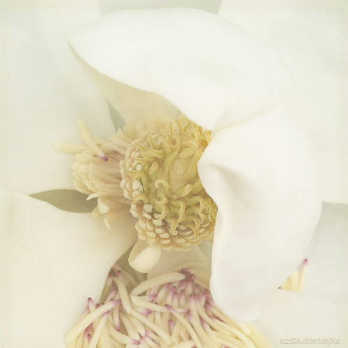 Plantation Blossom by Suzette.desertskyblue