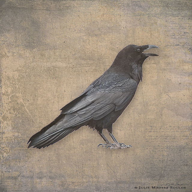 Raven print, a solitary raven with each feather in exquisite detail is printed on a background texture with the look of old linen.