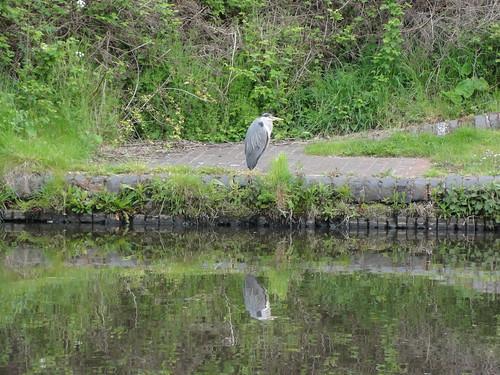 Nan's Heron