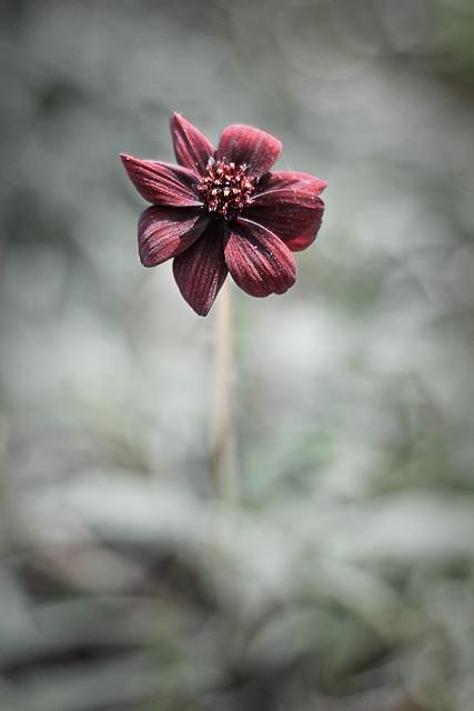 Blommor-20130531-2
