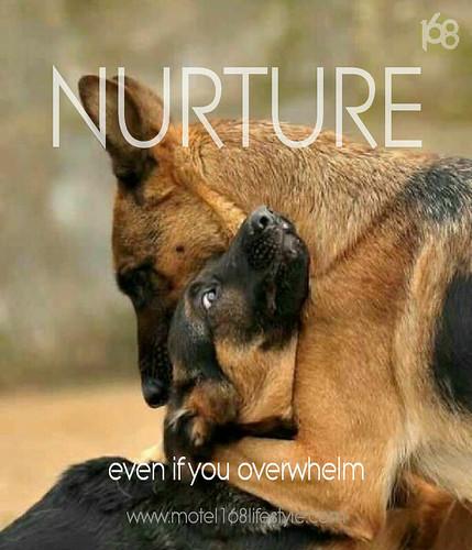pet advice