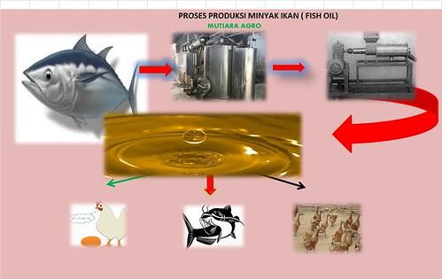 Minyak ikan oil fish