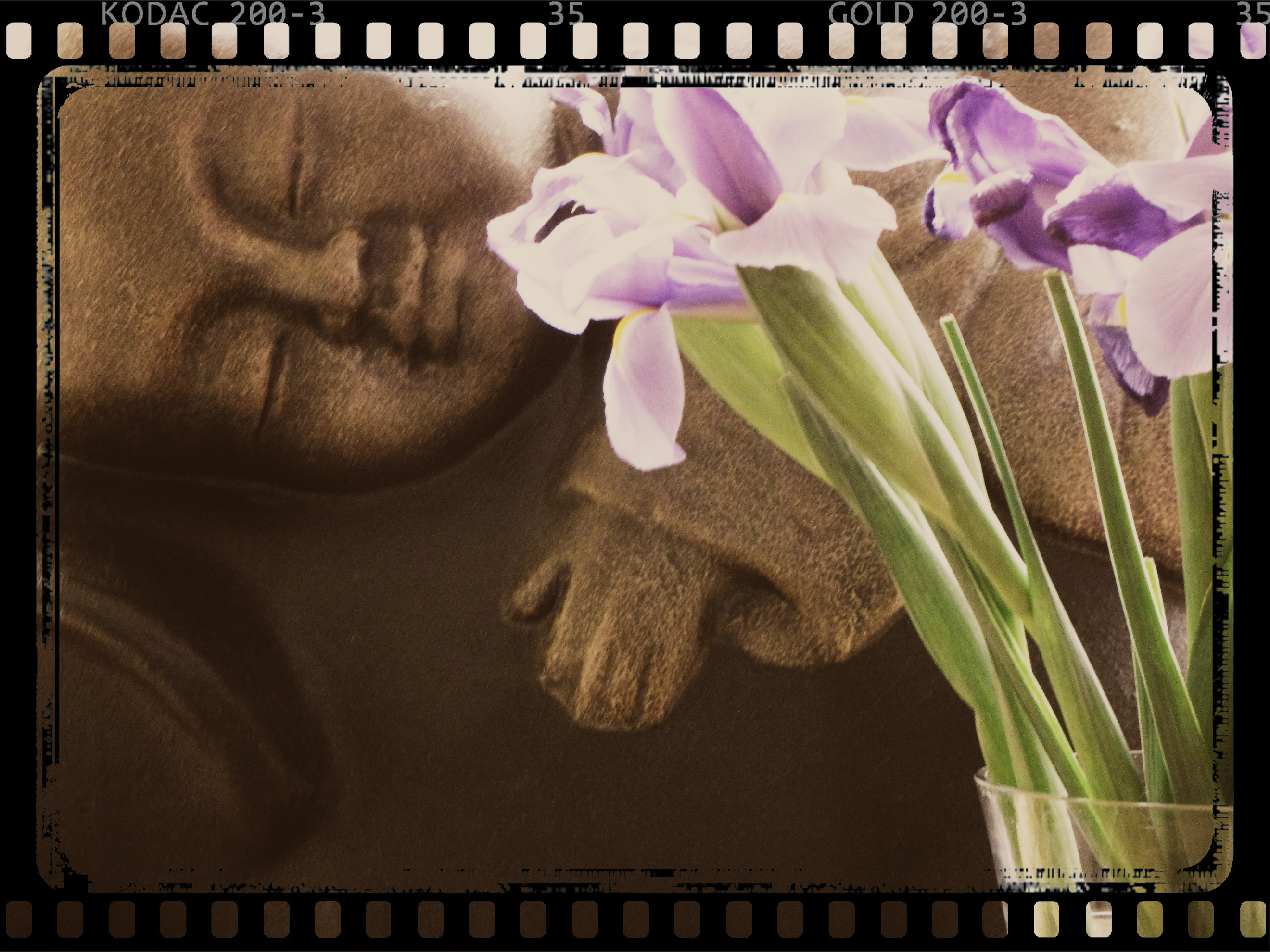 Baby Buddha with Iris
