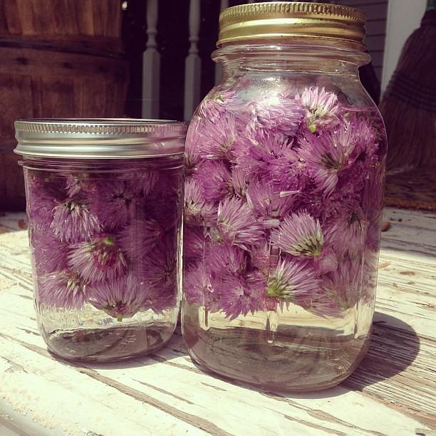 Chive flower vodka & chive flower vinegar