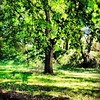 Lush green meadow in #bellwoods. #nature #instagood