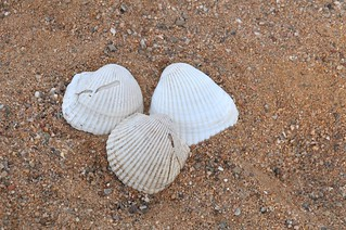 Collecting Sea Shells in Sandbox