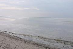 horizon, beach, sand, sea, ocean, body of water, wind wave, natural environment, mudflat, wave, shore, coast,