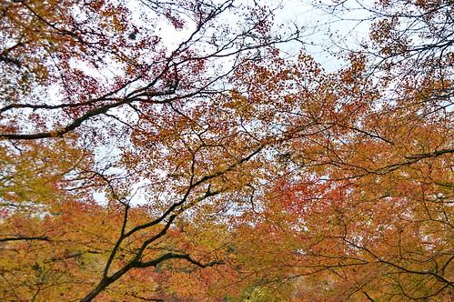 【写真】2012 紅葉 : 貴船神社/2019-02-06/IMGP5937