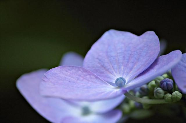 Minter Garden Photos