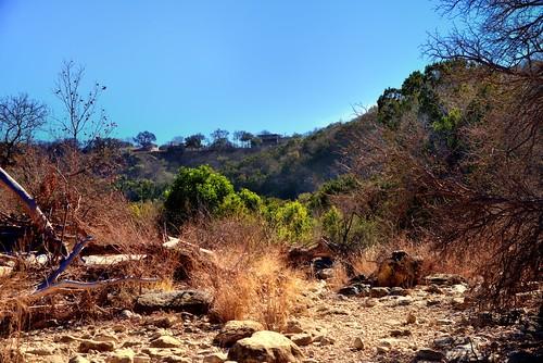 trees homes nature austin texas unitedstates blueskies bartoncreekgreenbelt hillsides project365 drycreekbed colorefexpro nikond800 driedupcreekbed jan2013