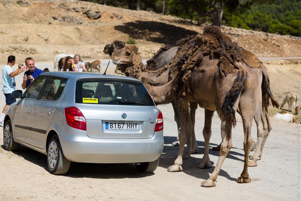 2013-Spain-Benidorm-SafariAitana-023