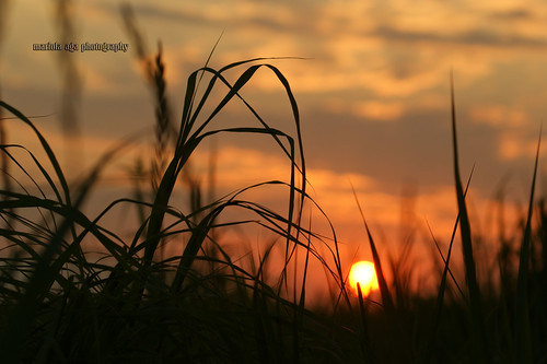 park sunset summer sun nature grass silhouette backlight evening dof bokeh quote meadow soul destination senses cure thegalaxy