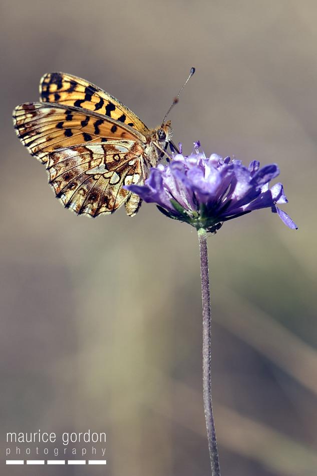 violet_DSC5791