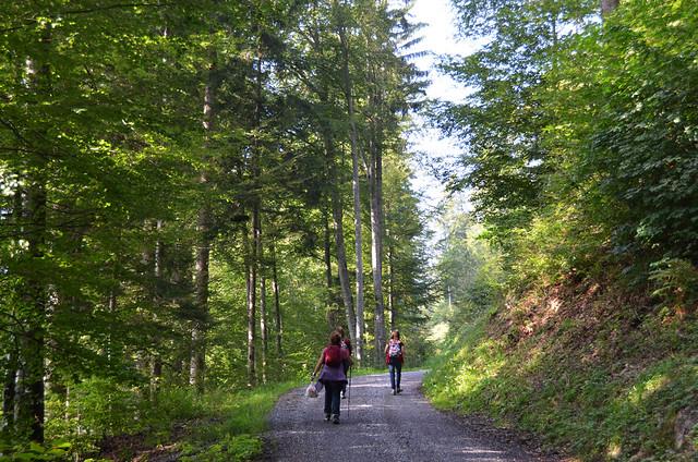 Sendero con camino ancho por el que paseamos camino de la casita de Heidi