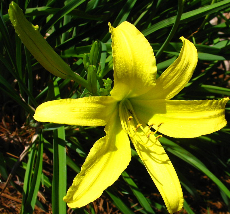 ABCW lily IMG_9733