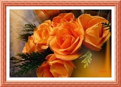 Rosas........P1110022EPF