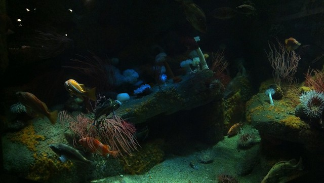Monterey Bay Aquarium 91 Flickr Photo Sharing