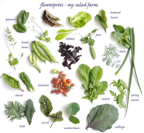 saladfarmc