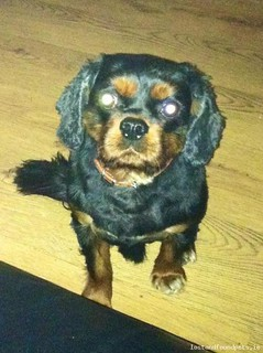 Thu, Apr 17th, 2014 Lost Male Dog - Thomas Street,  Dublin 8 Area