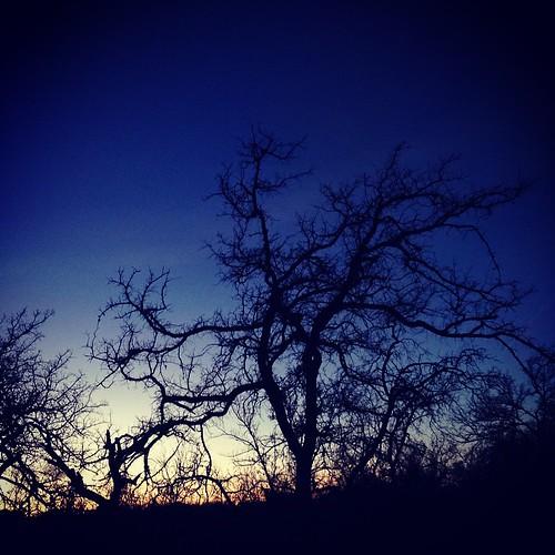 Lone Grove azure, witch-oak fingers.