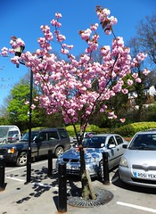 Stroud ... Waitrose in the pink.