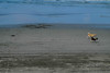 Doggeees in the beach. :)