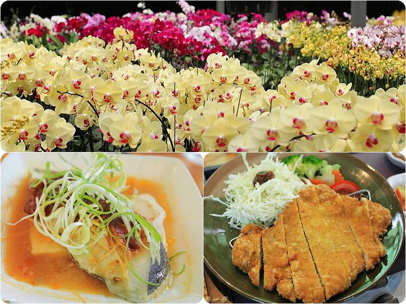 台南山上|蘭科植物園蘭花溫室|幸福花園餐點