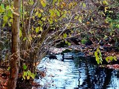Brookside Preserve - Autumn (40)