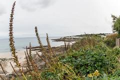 Portscatho view