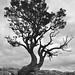 #81/100 - Hawthorn by Rum Bucolic Ape