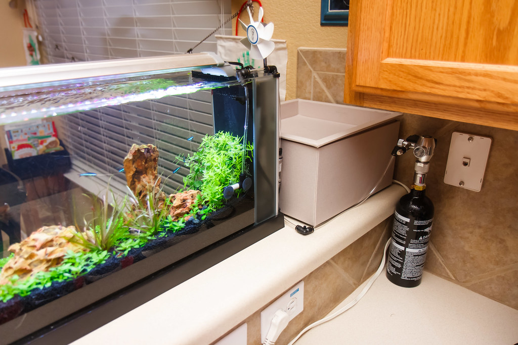 How to Setup a Paintball CO2 System for Your Planted Aquarium - Spec ...