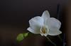 115/366: ¡Floreció!