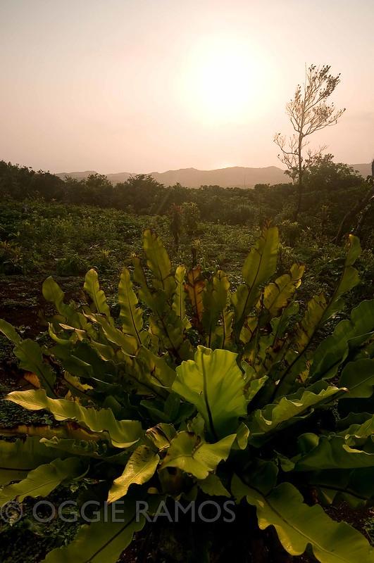 Batanes - Itbayat Karaboboan Viewdeck Sunrise III