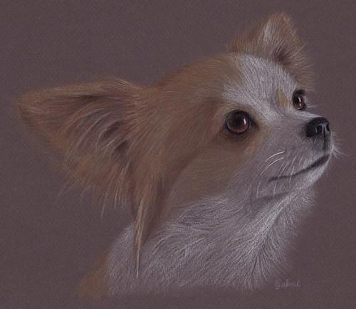 Chihuahua by Cat Gabriel