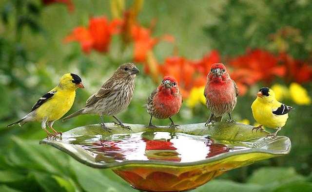 bird bath urban dictionary