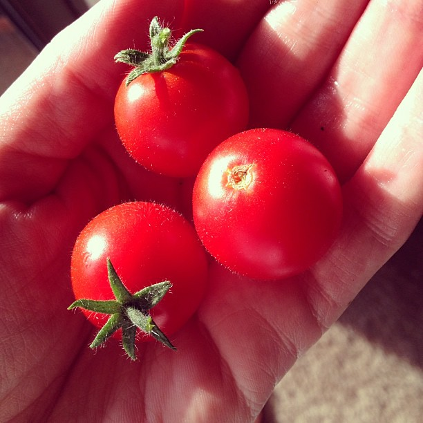 More amazing cherry tomatoes from my plant!