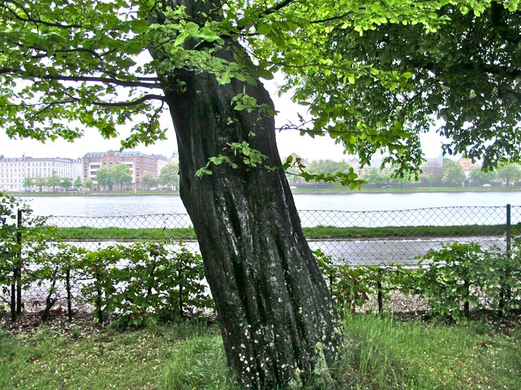 Endangered tree