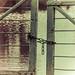 tranquera vintage by mancu2000