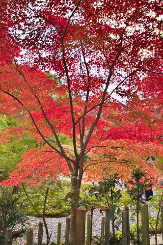 【写真】2012 紅葉 : 長岡天満宮/2020-10-09/IMGP6572