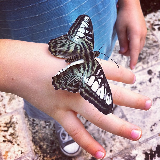 Made friends in the butterfly garden...