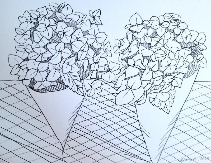 Hydrangea sketch