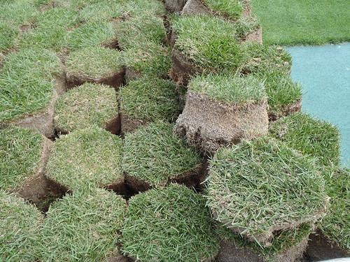 芝生の補修
