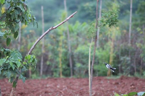 bamboorustles