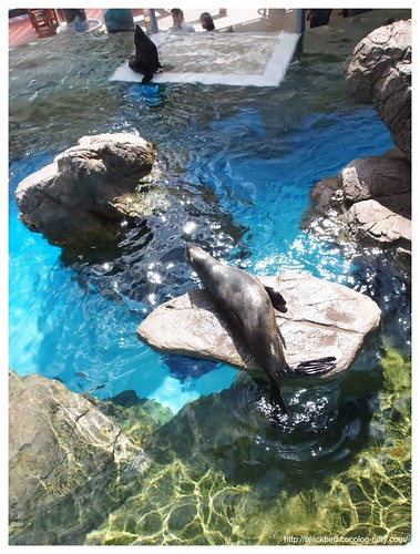 Aquarium #11