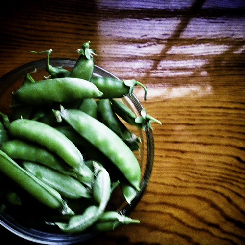 Snap Peas Thankful Harvest